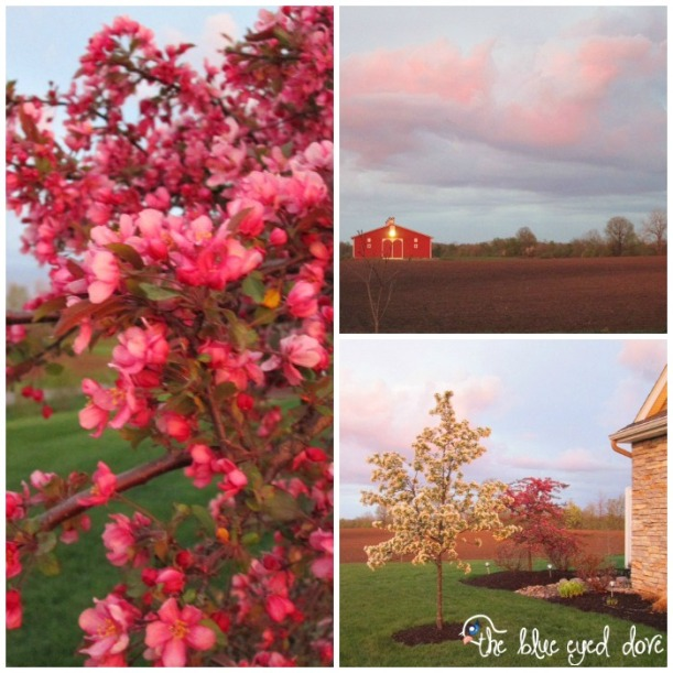 Spring Nature Collage